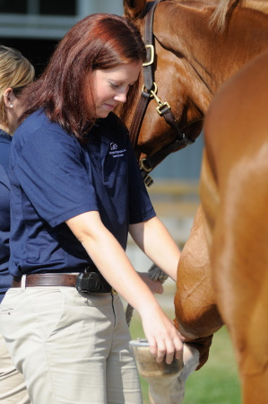 American Association of Equine Practitioners (AAEP)