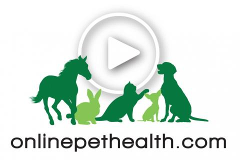 Onlinepethealth