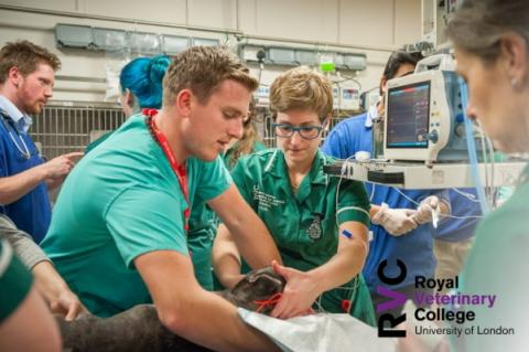 RVC - Emergency and critical care nursing online