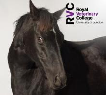 RVC - Oh no, I think it's ataxic! A practical approach to the neurological examination of the horse