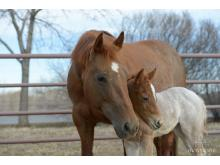 CSU - Equine Reproduction Laboratory