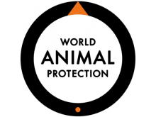 World Animal Protection - animalsindisasters.org