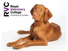 RVC - Pancreatitis and biliary disease in dogs and cats