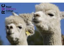 RVC - Common diseases in alpacas – case management (individual and herd), therapeutics and prevention