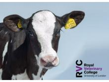 RVC - Anaesthesia and analgesia in farm animal