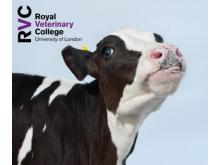 RVC - Antimicrobial selection in farm animal practice