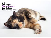 RVC - Trixie can't walk – approach to cats with aortic thromboembolism