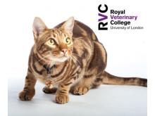 RVC - The cat with breathing difficulties