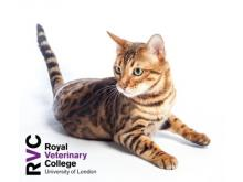 RVC - The emergency feline patient