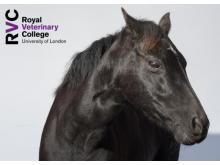 RVC - Practical interpretation of your biochemistry and haematology in the horse