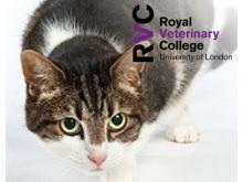 RVC - Feline acromegaly