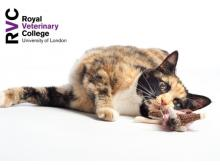 RVC - Update on feline diabetes mellitus – what's new in the world of diagnosis, monitoring and treatment?