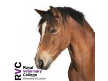 RVC - First aid and resuscitation of the sick neonatal foal