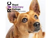 RVC - Diagnosis and treatment of protein losing enteropathy (PLE)
