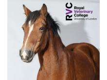 RVC - Recorded e-CPD: Difficult births, sick foals and other equine emergencies for nurses