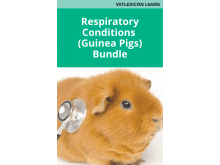 Respiratory Conditions Bundle (Guinea Pigs)