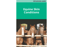 Equine Skin Conditions