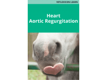 Heart: Aortic Regurgitation
