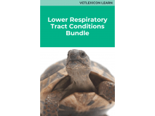 Lower Respiratory Tract Conditions Bundle (Reptile)