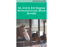 1st, 2nd and 3rd Degree Atrioventricular Block in Horses Bundle