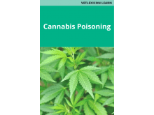 Cannabis Poisoning in Dogs